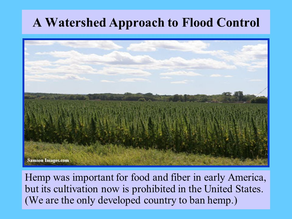 A Watershed Approach to Flood Control Hemp was important for food and fiber in early America, but its cultivation now is prohibited in the United States.