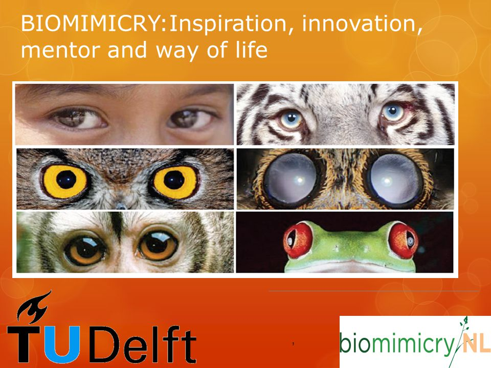 BIOMIMICRY:Inspiration, innovation, mentor and way of life,