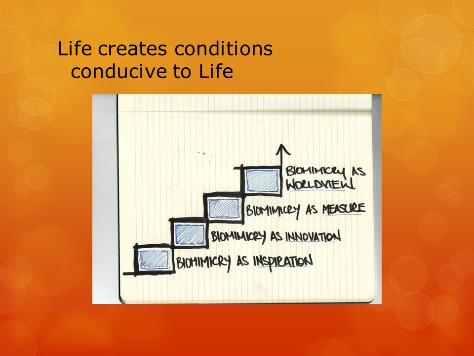 Life creates conditions conducive to Life