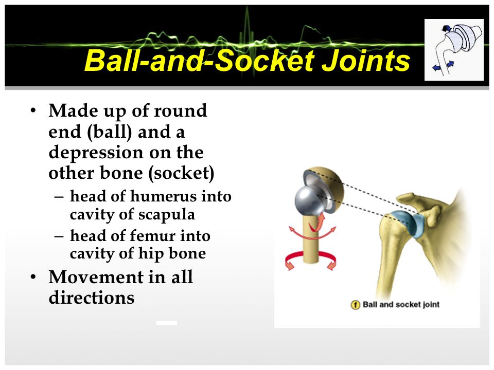Joints of the Body Joints are the connection point between each bone in the body. Where two bones meet is known as a joint Ball and Socket Hinge Joint