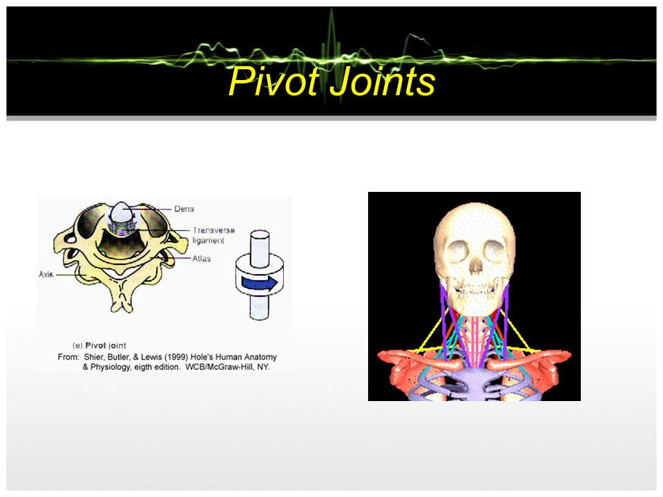 Pivot Joints Allows fixed movement between the two bones. Movement occurs in rotary direction both forwards and backwards E.g Neck