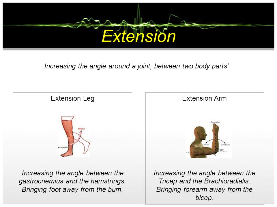 Flexion Decreasing the angle around a joint, between two body parts Flexion Leg Reducing the angle between the gastrocnemius and the hamstrings. Bring