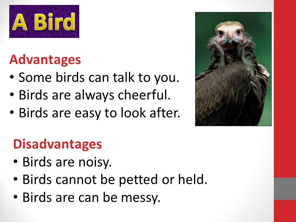 Advantages Some birds can talk to you. Birds are always cheerful.