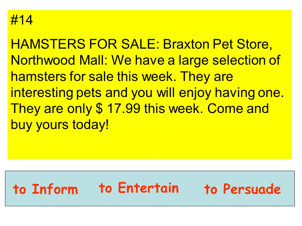 #14 HAMSTERS FOR SALE: Braxton Pet Store, Northwood Mall: We have a large selection of hamsters for sale this week. They are interesting pets and you
