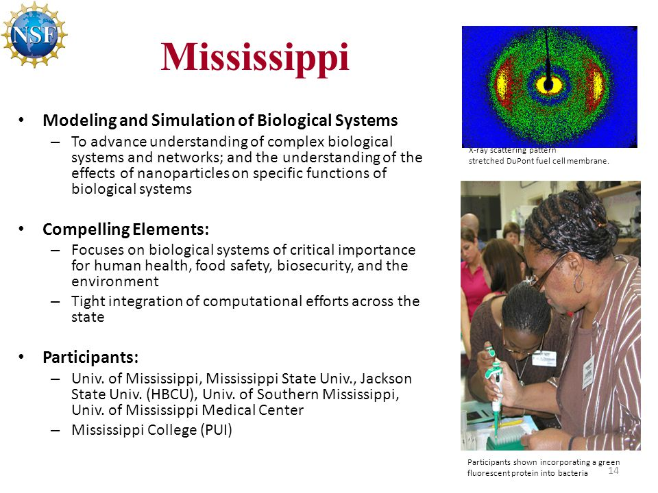 Mississippi Modeling and Simulation of Biological Systems – To advance understanding of complex biological systems and networks; and the understanding of the effects of nanoparticles on specific functions of biological systems Compelling Elements: – Focuses on biological systems of critical importance for human health, food safety, biosecurity, and the environment – Tight integration of computational efforts across the state Participants: – Univ.