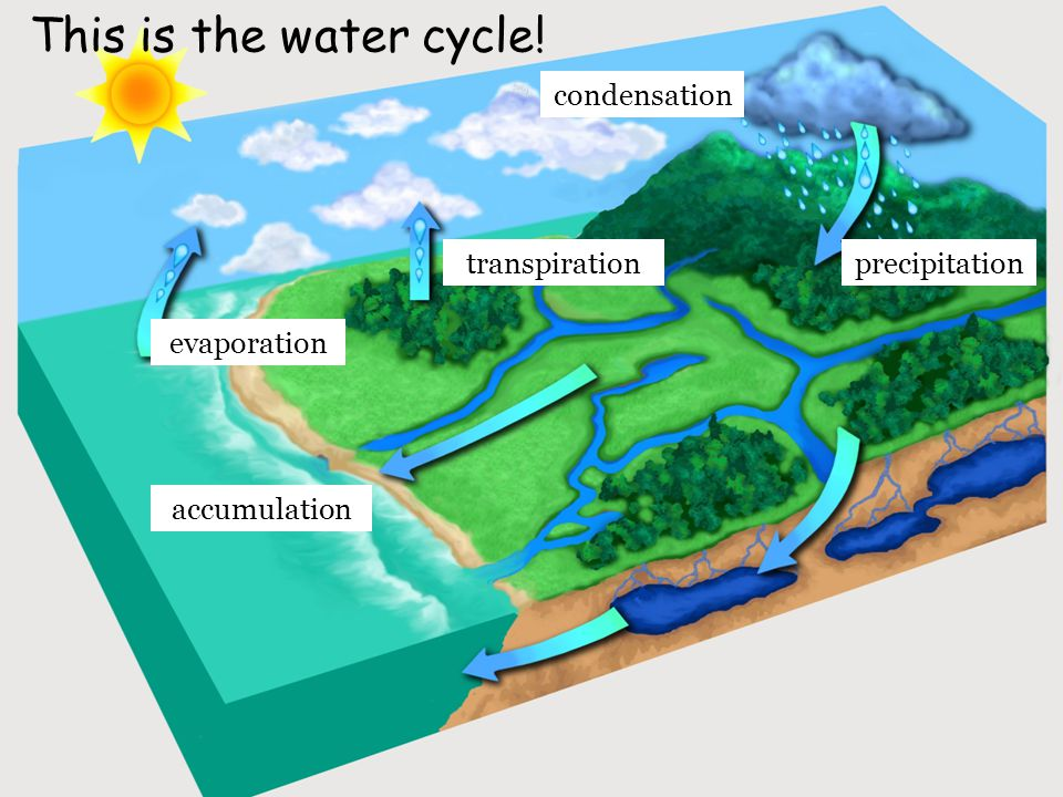 This is the water cycle! precipitation evaporation accumulation transpiration condensation