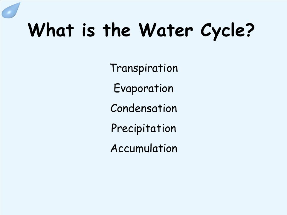 What is the Water Cycle? Transpiration Evaporation Condensation Precipitation Accumulation