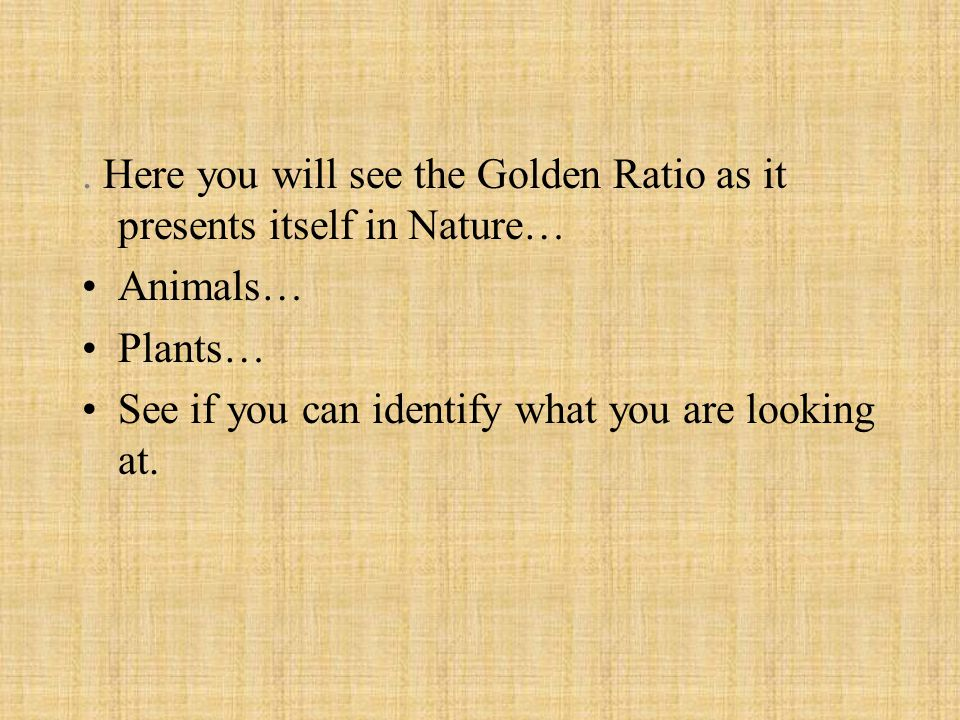 . Here you will see the Golden Ratio as it presents itself in Nature… Animals… Plants… See if you can identify what you are looking at.