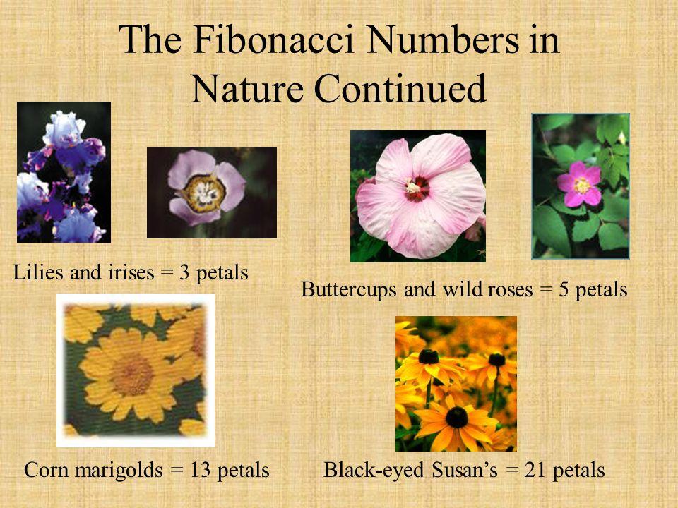 The Fibonacci Numbers in Nature Continued Lilies and irises = 3 petals Black-eyed Susans = 21 petalsCorn marigolds = 13 petals Buttercups and wild ros