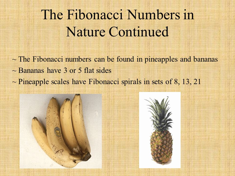 The Fibonacci Numbers in Nature Continued ~ The Fibonacci numbers can be found in pineapples and bananas ~ Bananas have 3 or 5 flat sides ~ Pineapple