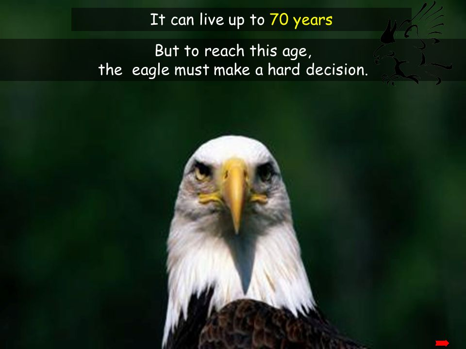 The eagle has the longest life-span of its species