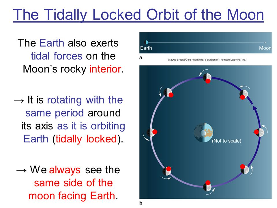 The Tidally Locked Orbit of the Moon The Earth also exerts tidal forces on the Moons rocky interior. It is rotating with the same period around its ax