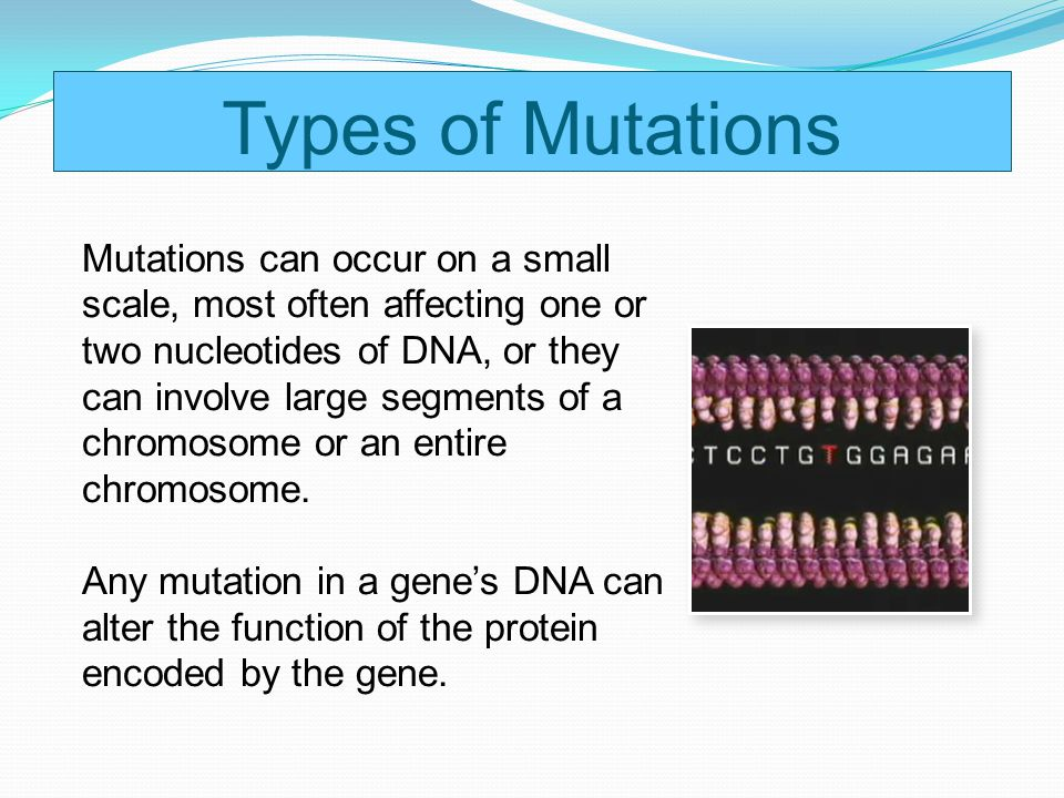 Types of Mutations Mutations can occur on a small scale, most often affecting one or two nucleotides of DNA, or they can involve large segments of a c