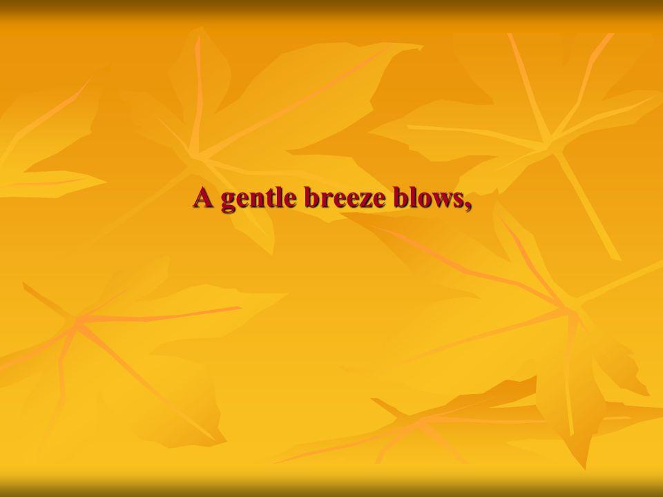 A gentle breeze blows,