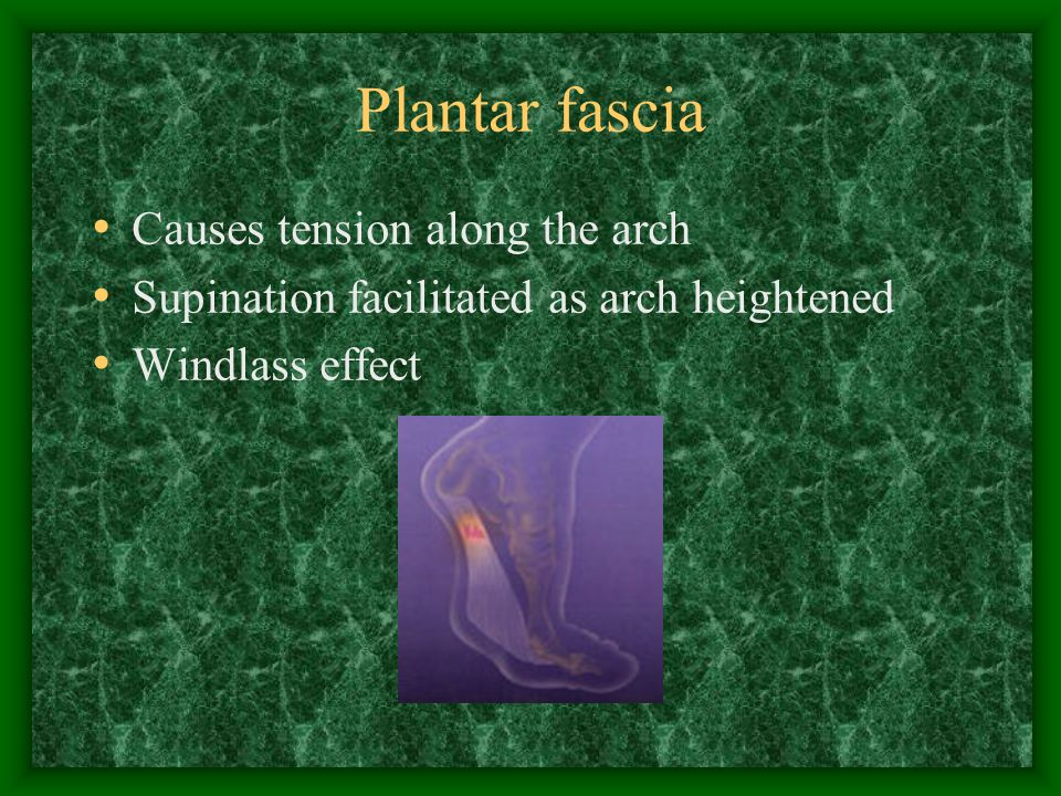 Plantar fascia Causes tension along the arch Supination facilitated as arch heightened Windlass effect