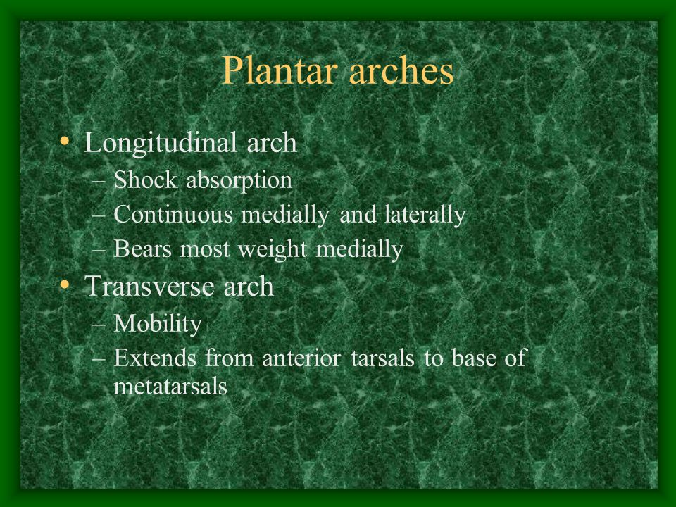 Plantar arches Longitudinal arch –Shock absorption –Continuous medially and laterally –Bears most weight medially Transverse arch –Mobility –Extends f
