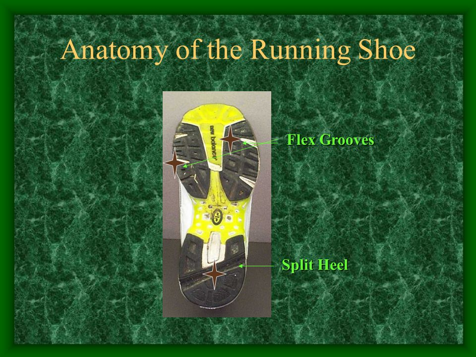 Anatomy of the Running Shoe Flex Grooves Split Heel