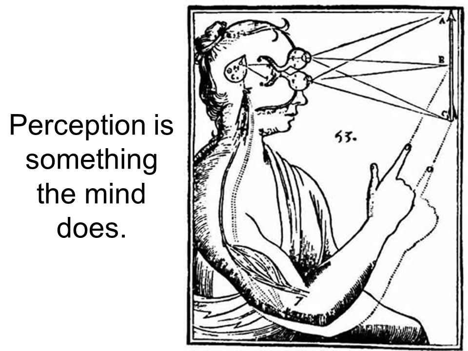Perception is something the mind does.