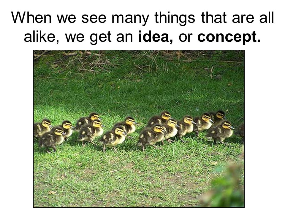 When we see many things that are all alike, we get an idea, or concept.
