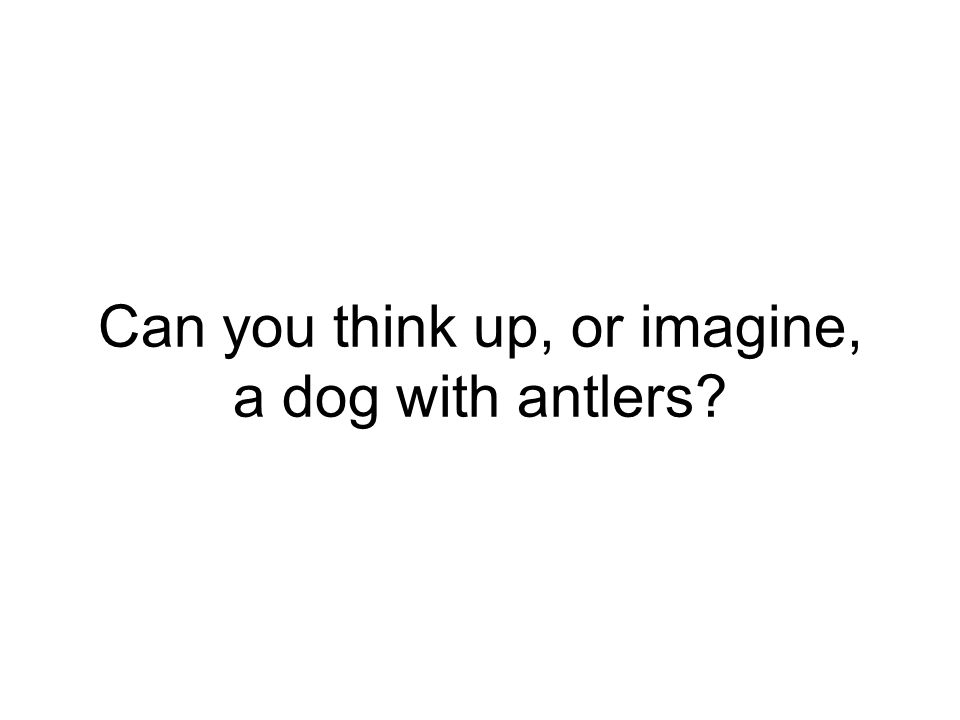Can you think up, or imagine, a dog with antlers