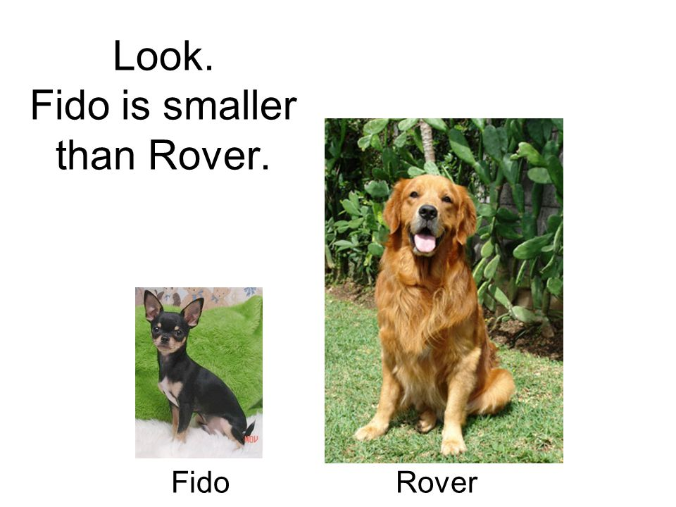 Look. Fido is smaller than Rover. Fido Rover