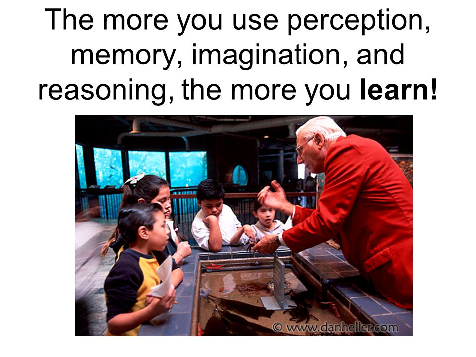The more you use perception, memory, imagination, and reasoning, the more you learn!