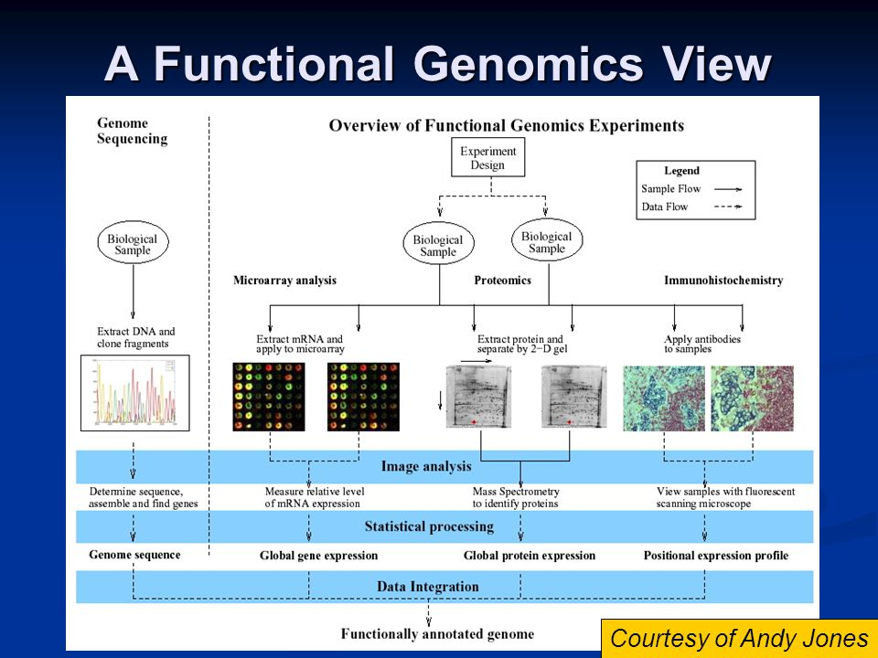 A Functional Genomics View Courtesy of Andy Jones