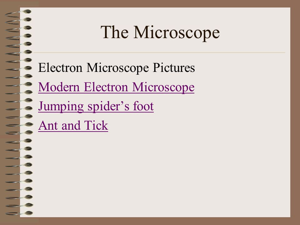 Electron Microscope Pictures Modern Electron Microscope Jumping spiders foot Ant and Tick