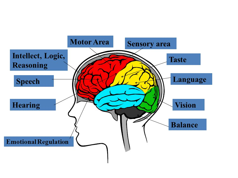 Intellect, Logic, Reasoning Motor Area Sensory area Taste Language Vision Balance Speech Hearing Emotional Regulation