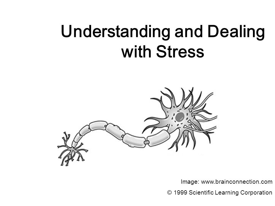 Understanding and Dealing with Stress Image: www.brainconnection.com © 1999 Scientific Learning Corporation