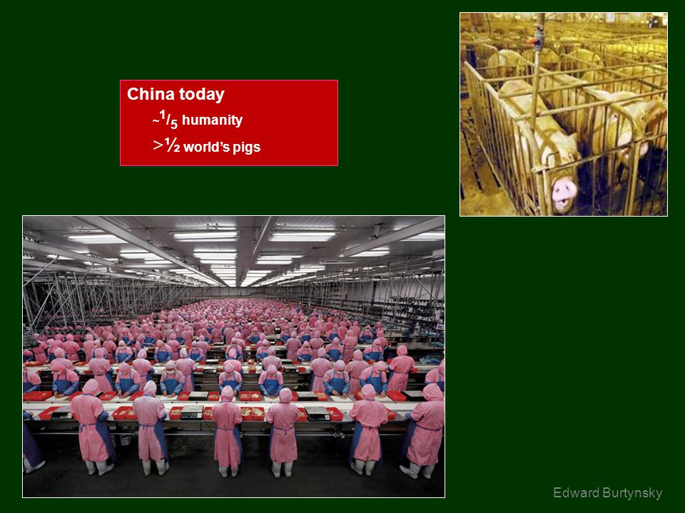 China today ~ 1 / 5 humanity >½ worlds pigs Edward Burtynsky