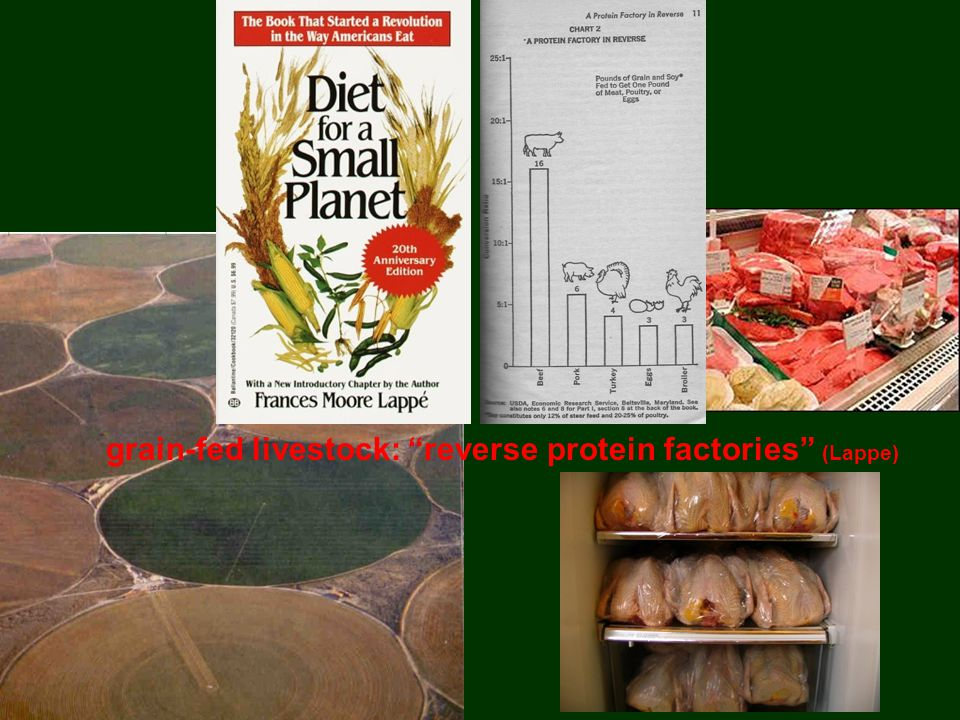 grain-fed livestock: reverse protein factories (Lappe)