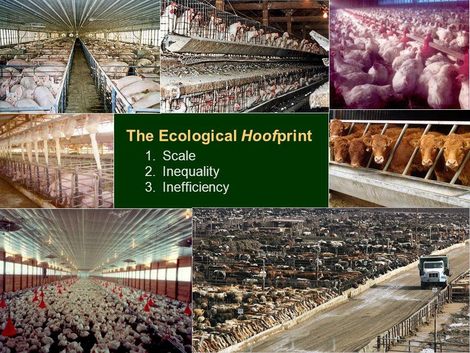 The Ecological Hoofprint 1.Scale 2.Inequality 3.Inefficiency