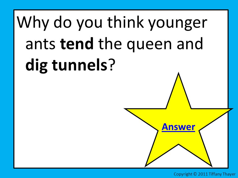 Why do you think younger ants tend the queen and dig tunnels? Answer Copyright © 2011 Tiffany Thayer