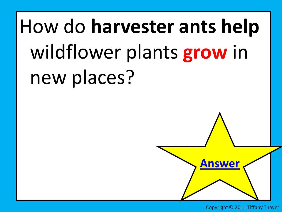 How do harvester ants help wildflower plants grow in new places? Answer Copyright © 2011 Tiffany Thayer