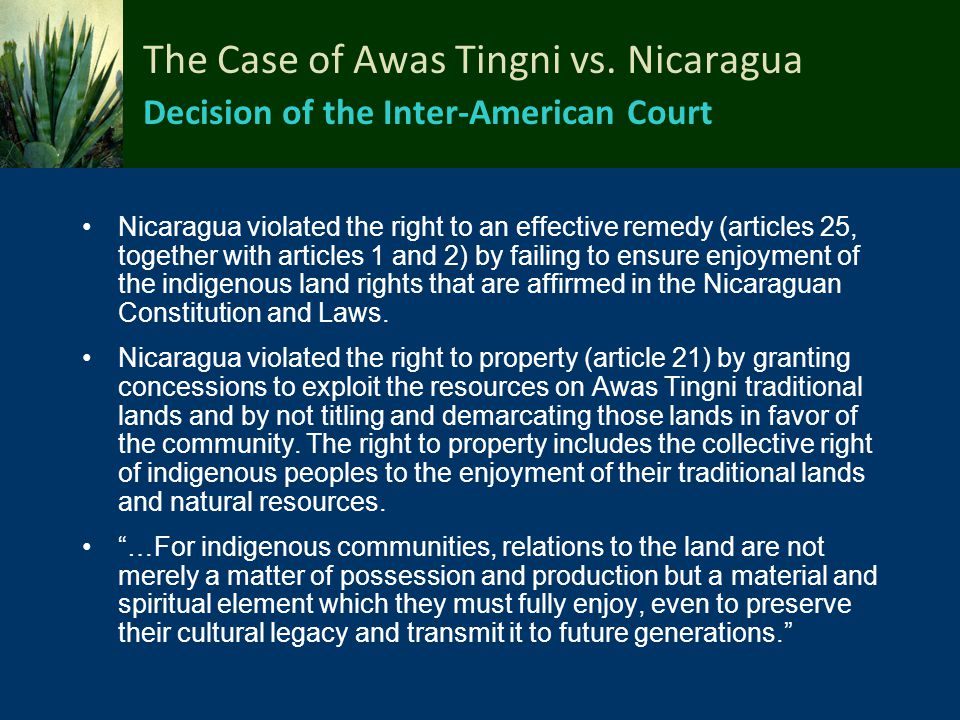 The Case of Awas Tingni vs. Nicaragua Decision of the Inter-American Court Nicaragua violated the right to an effective remedy (articles 25, together