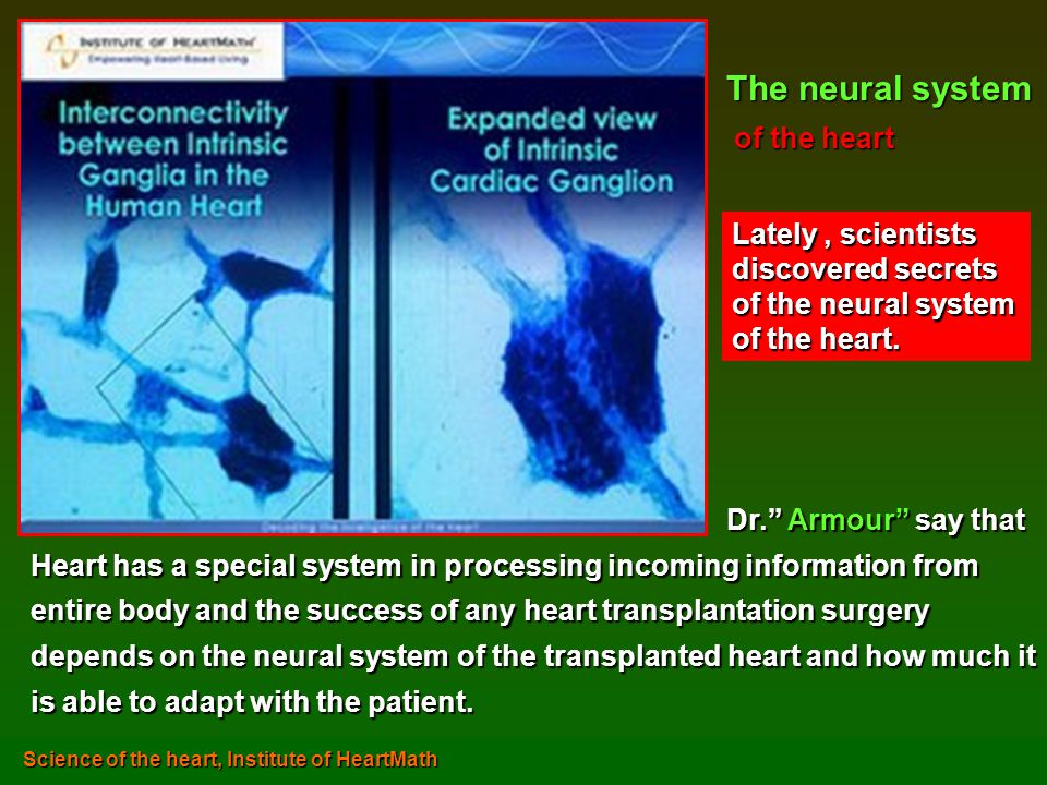 Dr. Armour say that Heart has a special system in processing incoming information from entire body and the success of any heart transplantation surger