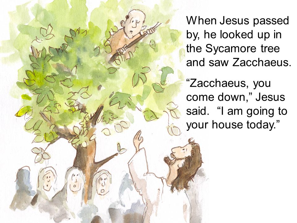 When Jesus passed by, he looked up in the Sycamore tree and saw Zacchaeus. Zacchaeus, you come down, Jesus said. I am going to your house today.