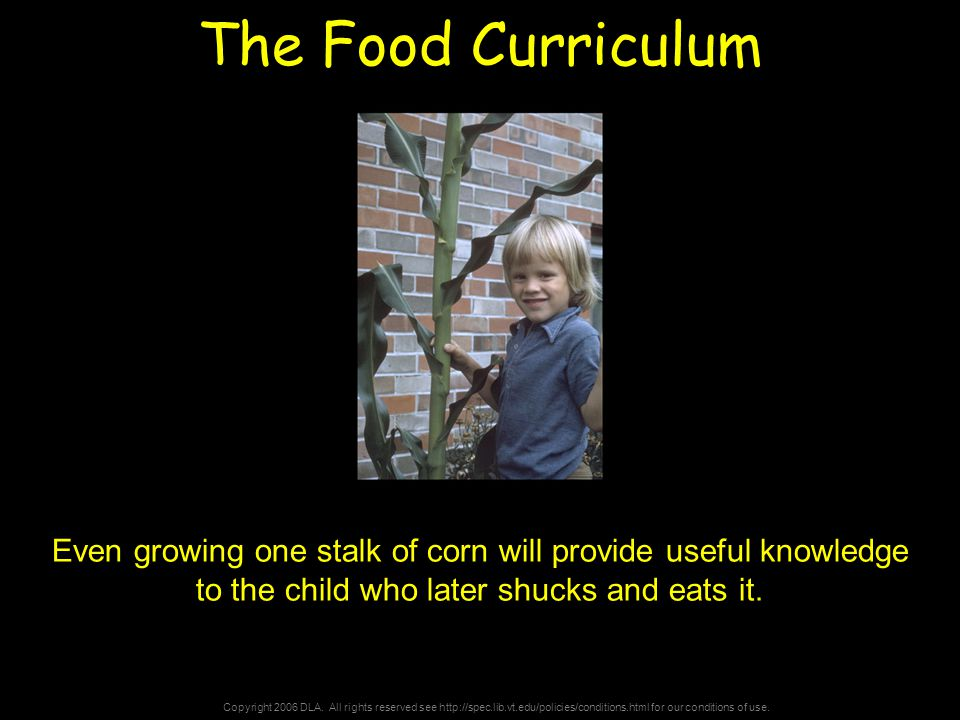 Copyright 2006 DLA. All rights reserved see http://spec.lib.vt.edu/policies/conditions.html for our conditions of use. The Food Curriculum Even growin