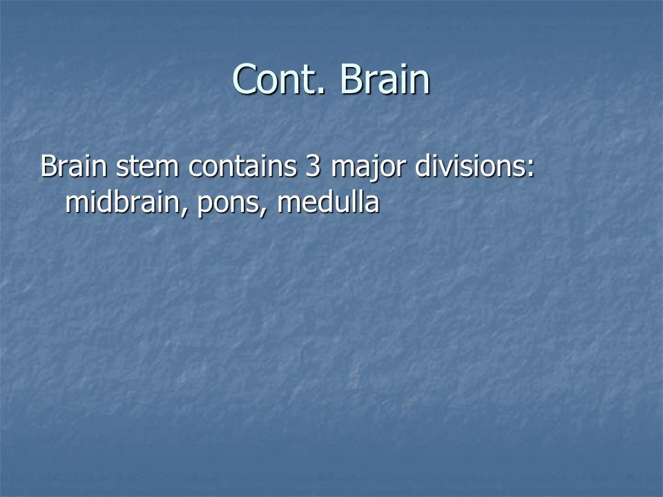 Cont. Brain Brain stem contains 3 major divisions: midbrain, pons, medulla