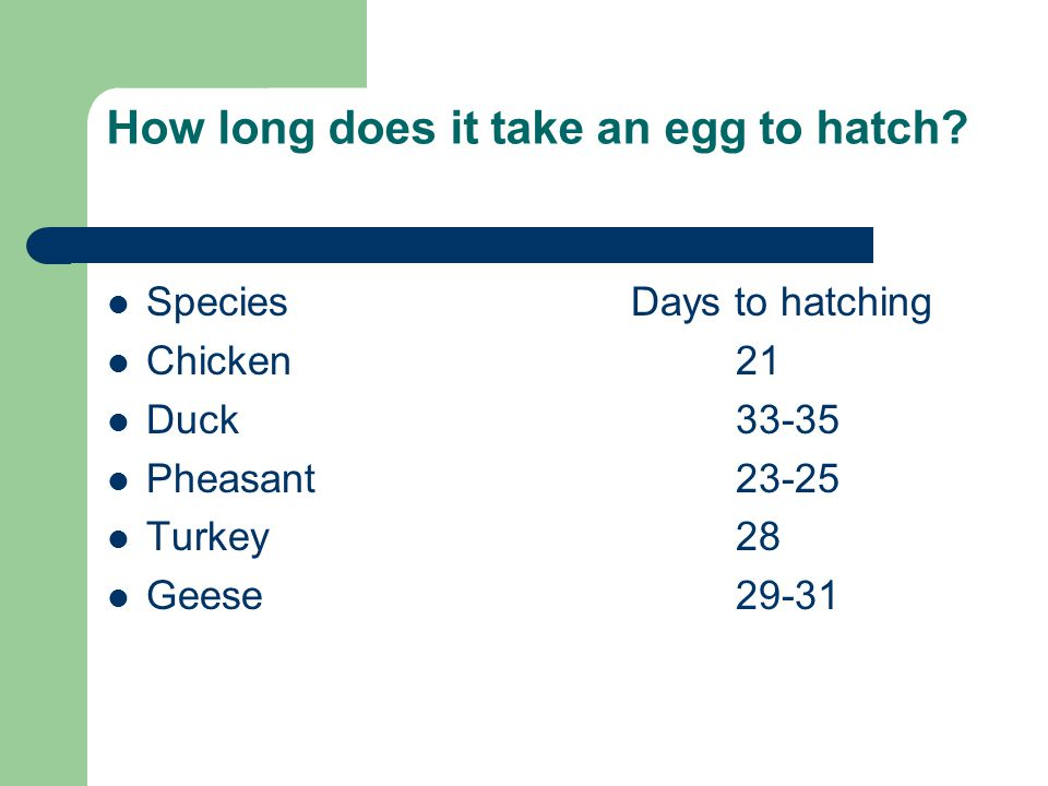 How long does it take an egg to hatch? SpeciesDays to hatching Chicken21 Duck33-35 Pheasant23-25 Turkey28 Geese29-31