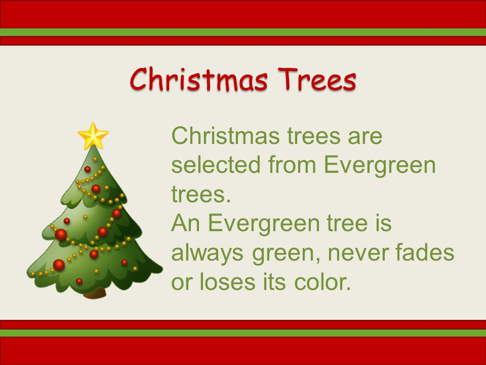 Christmas Trees Christmas trees are selected from Evergreen trees. An Evergreen tree is always green, never fades or loses its color.