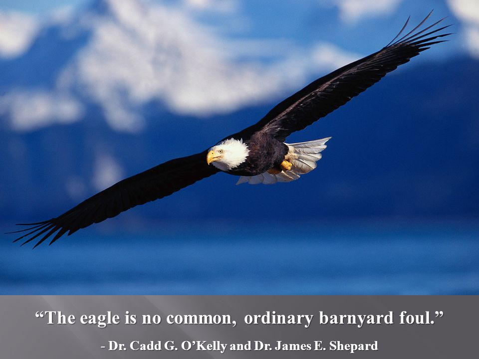 The eagle is no common, ordinary barnyard foul. - Dr. Cadd G. OKelly and Dr. James E. Shepard