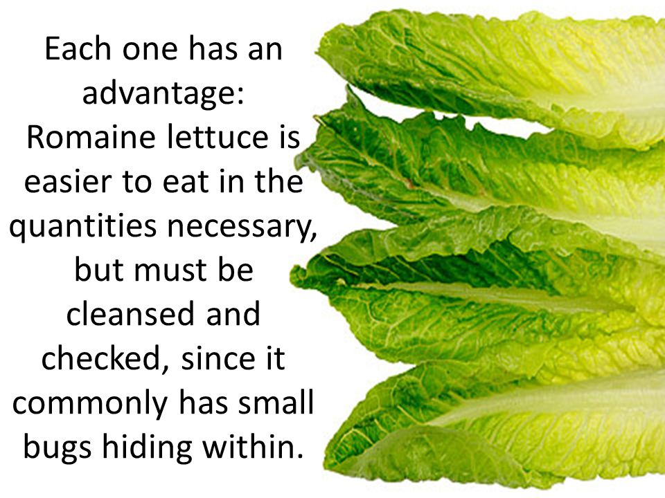 Each one has an advantage: Romaine lettuce is easier to eat in the quantities necessary, but must be cleansed and checked, since it commonly has small