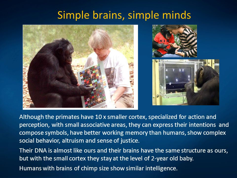 Neural determinism Our possibilities are limited by genetic and neural determinism.