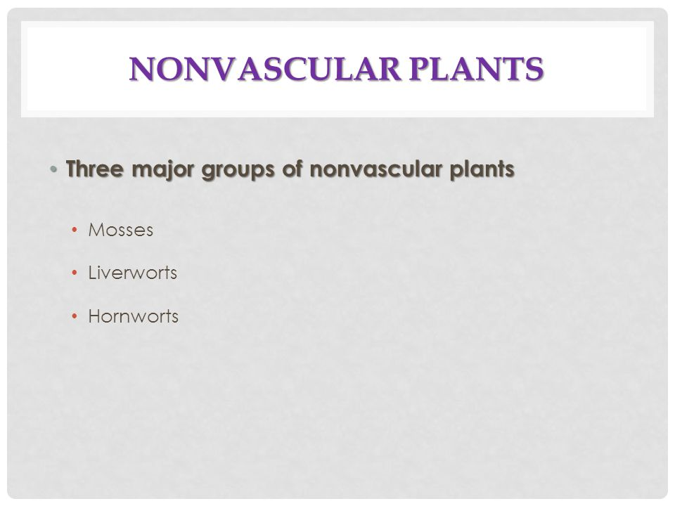 NONVASCULAR PLANTS Three major groups of nonvascular plants Three major groups of nonvascular plants Mosses Liverworts Hornworts