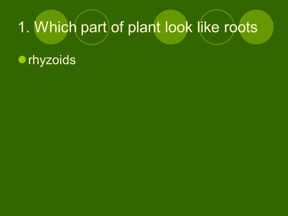 1. Which part of plant look like roots rhyzoids