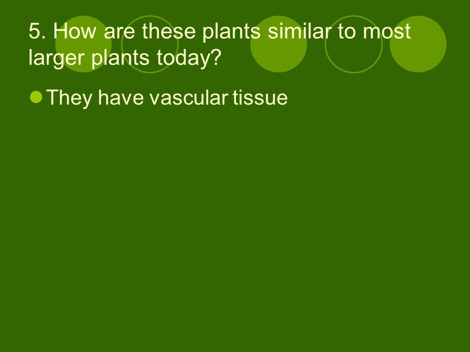 5. How are these plants similar to most larger plants today? They have vascular tissue