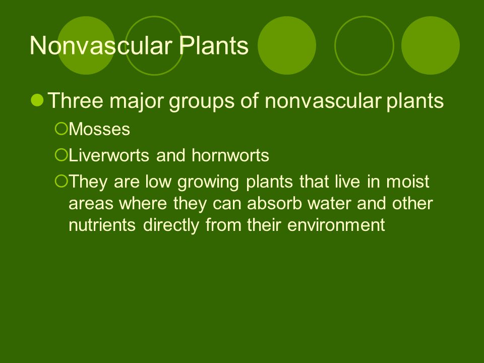 Nonvascular Plants Three major groups of nonvascular plants Mosses Liverworts and hornworts They are low growing plants that live in moist areas where