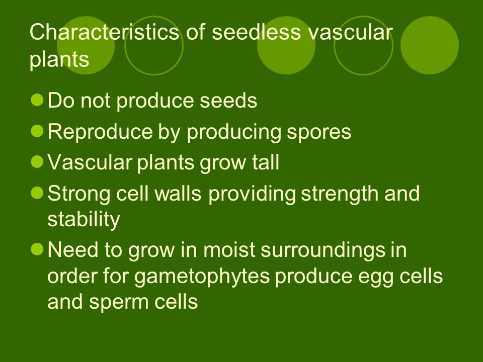 Characteristics of seedless vascular plants Do not produce seeds Reproduce by producing spores Vascular plants grow tall Strong cell walls providing s